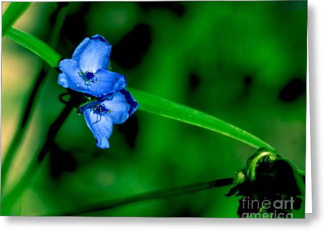 Blue Flowers Tapestries - Textiles Greeting Cards - Butterfly Flower Greeting Card by James Hennis