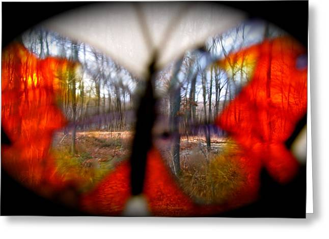 Photos Of Autumn Digital Greeting Cards - Butterfly Forest Greeting Card by Debra     Vatalaro