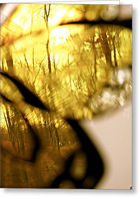 Photos Of Autumn Digital Greeting Cards - Butterfly Forest  E Greeting Card by Debra     Vatalaro