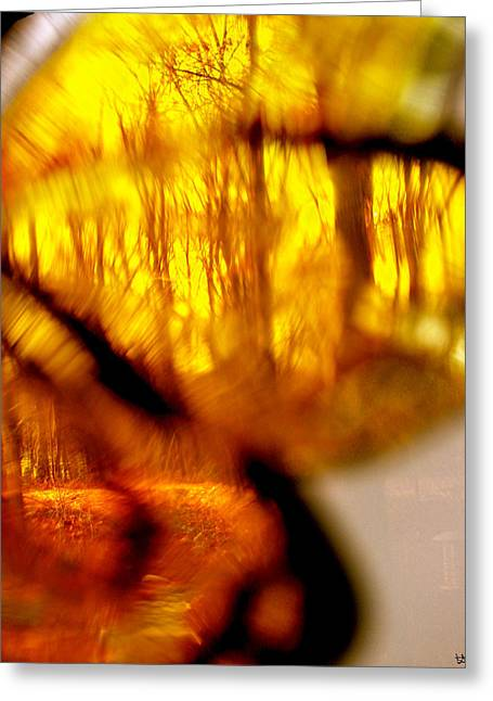 Photos Of Autumn Digital Greeting Cards - Butterfly Forest  H Greeting Card by Debra     Vatalaro