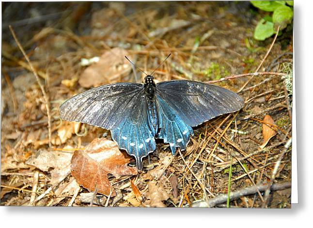 Forest Floor Greeting Cards - Butterfly in the forest Greeting Card by David Lee Thompson