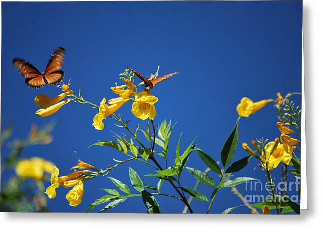 Recently Sold -  - Bloosom Greeting Cards - Butterfly in the Sonoran Desert Musuem Greeting Card by Donna Van Vlack