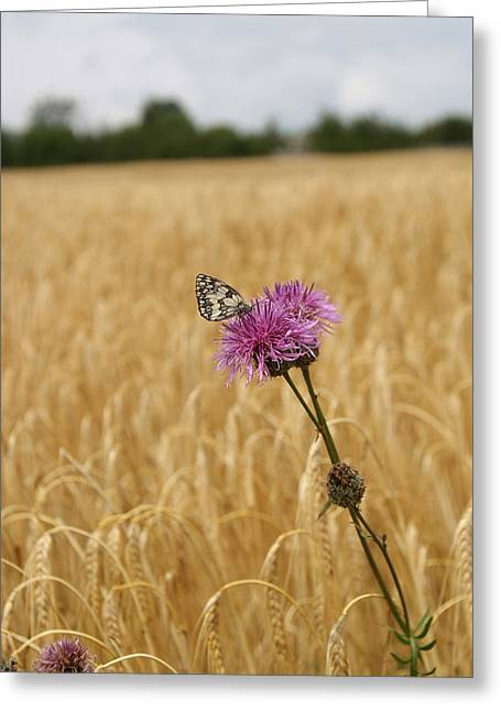 Butterfly In Wheat Field Greeting Card by Jessica Rose