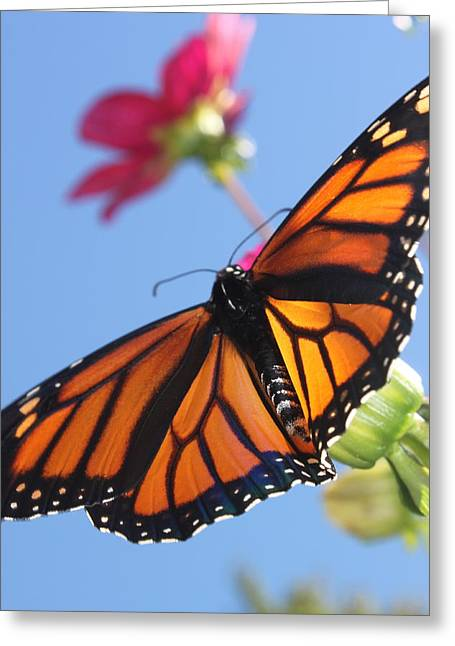 Insects Jewelry Greeting Cards - Butterfly Greeting Card by Kathy Pasca
