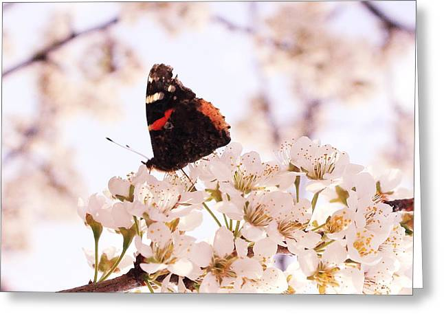 Cocoon Greeting Cards - Butterfly Greeting Card by Melanie Grass