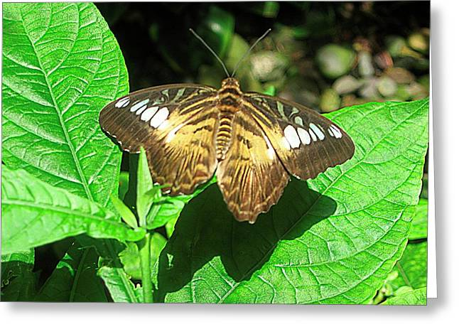 Butterfly Of Brown Wings On Green  Greeting Card by Mario Perez