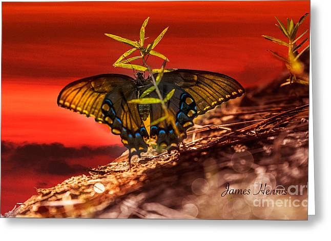 Mountain Tapestries - Textiles Greeting Cards - Butterfly on a mountain Greeting Card by James Hennis