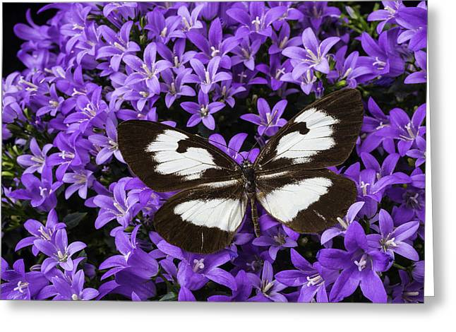 Butterfly On Campanula Get Mee Greeting Card by Garry Gay