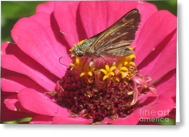 Daughter Gift Greeting Cards - Butterfly on Flower Greeting Card by John Messmer