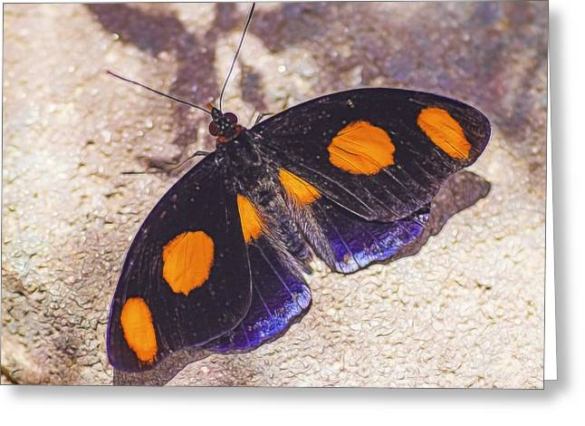 Color Enhanced Greeting Cards - Butterfly on the ground Greeting Card by Gloria Anderson