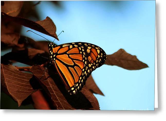 Butterfly On Tree Leaves Greeting Card by Lori Tordsen