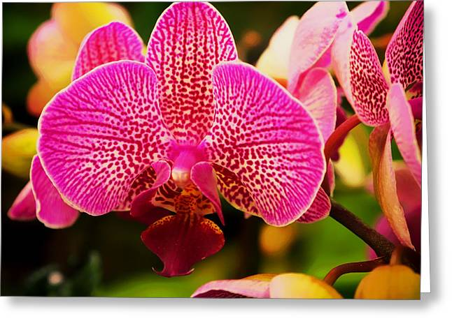 Falklands Greeting Cards - Butterfly Orchids Greeting Card by Lee Chen Tou