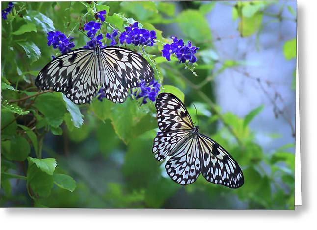 Rice Paper Greeting Cards - Butterfly Pair - Rice Paper Greeting Card by Nikolyn McDonald