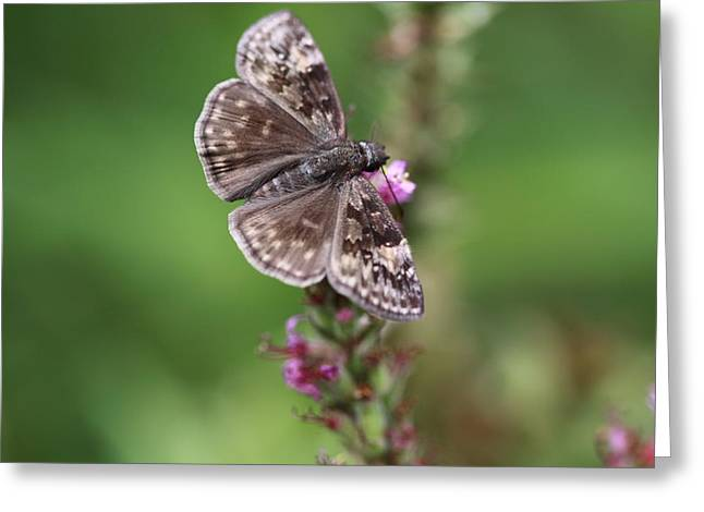 Butterlfy Greeting Cards - Butterfly Greeting Card by Paul Slebodnick