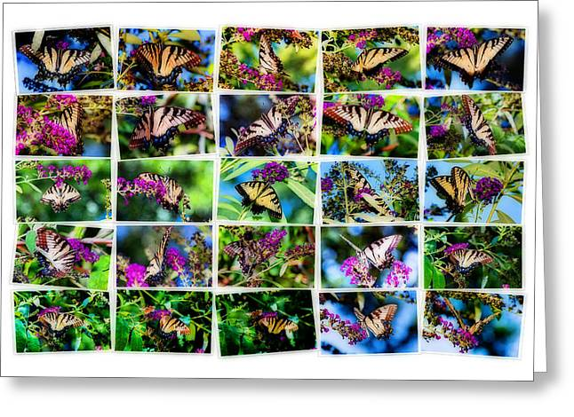 Butterfly Plethora II Greeting Card by Gary Adkins