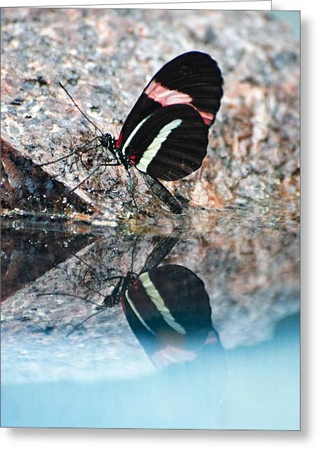 Butterfly Reflection Greeting Card by Cheryl Cencich