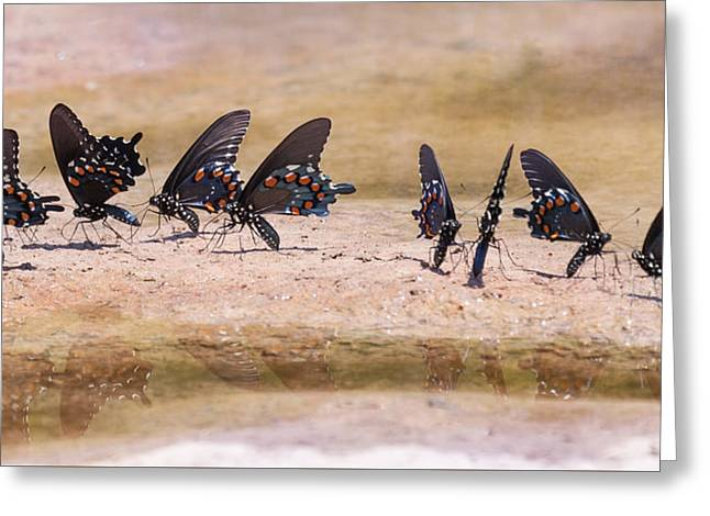 Tennessee River Greeting Cards - Butterfly Reflections Greeting Card by Melinda Fawver