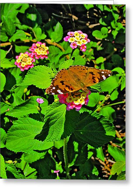 Civilization Greeting Cards - Butterfly. Santorini. Greeting Card by Andy Za