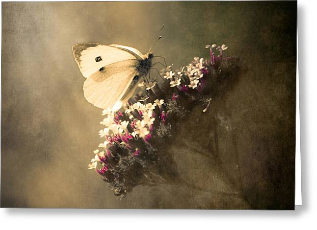 Square Format Greeting Cards - Butterfly Spirit #01 Greeting Card by Loriental Photography