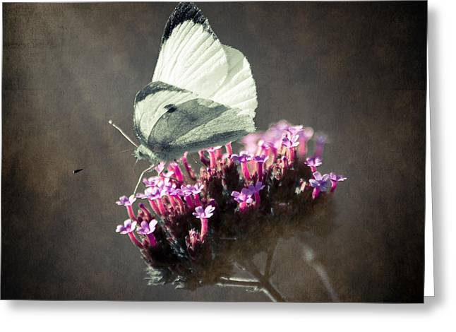 Square Format Greeting Cards - Butterfly Spirit #02 Greeting Card by Loriental Photography