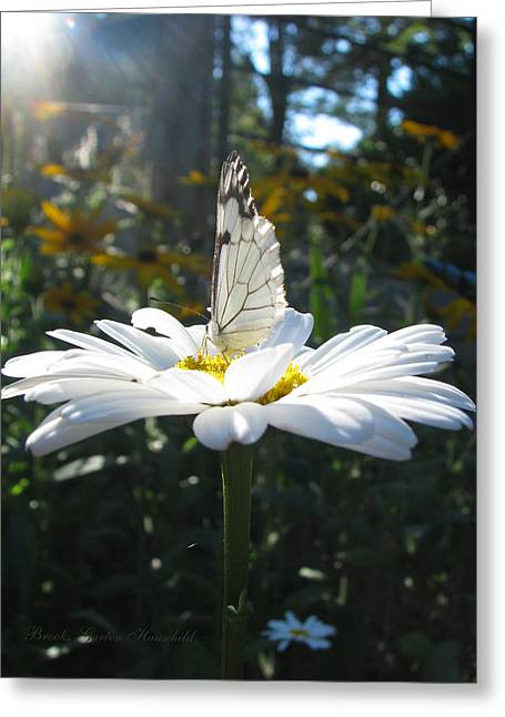 Sunlight On Flowers Greeting Cards - Butterfly Sundial Greeting Card by Brooks Garten Hauschild