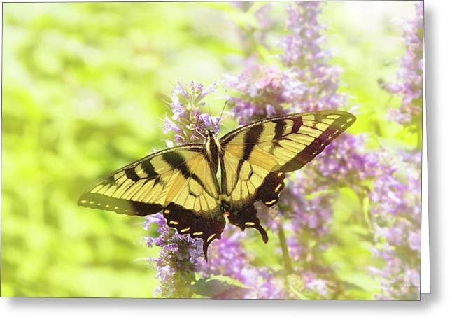 Butterfly - Swallowtail - Hard To Swallow Greeting Card by Mike Savad