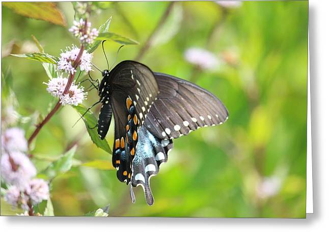 Nashville Tennessee Greeting Cards - Butterfly Sweets Greeting Card by Buffy Butler