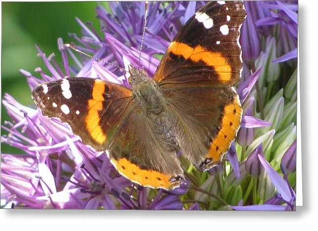 Butterfly With Allium Greeting Card by Alfred Ng