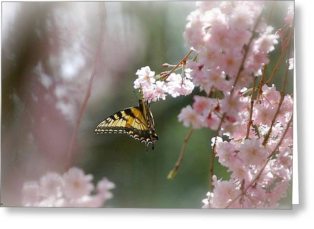 Weeping Greeting Cards - Butterfly with Misty Pink Greeting Card by Molly Dean