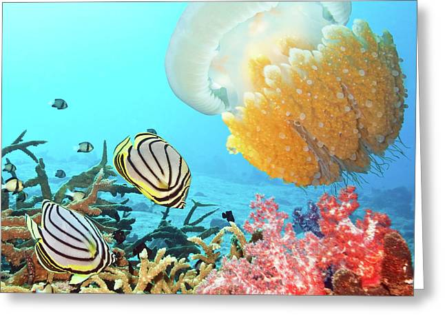 Scuba Diving Greeting Cards - Butterflyfishes and jellyfish Greeting Card by MotHaiBaPhoto Prints