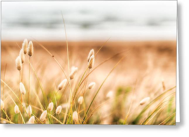 Button Grass Greeting Card by Jonathan Williams