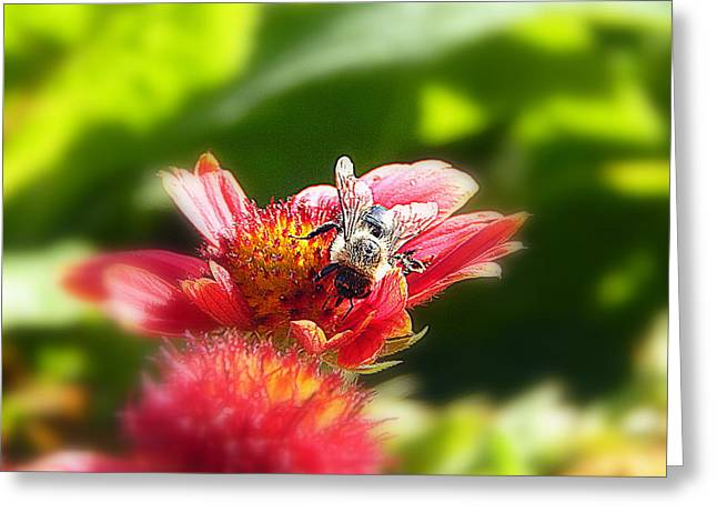 Sunlight On Flowers Greeting Cards - Buzz Greeting Card by Karen Cook