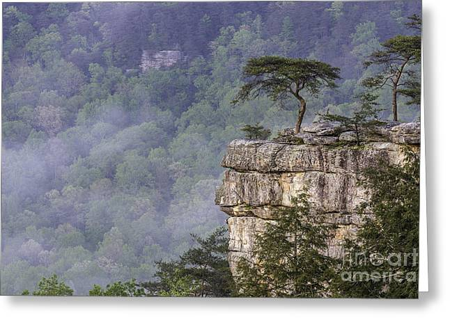 Buzzards Perch Greeting Card by Anthony Heflin