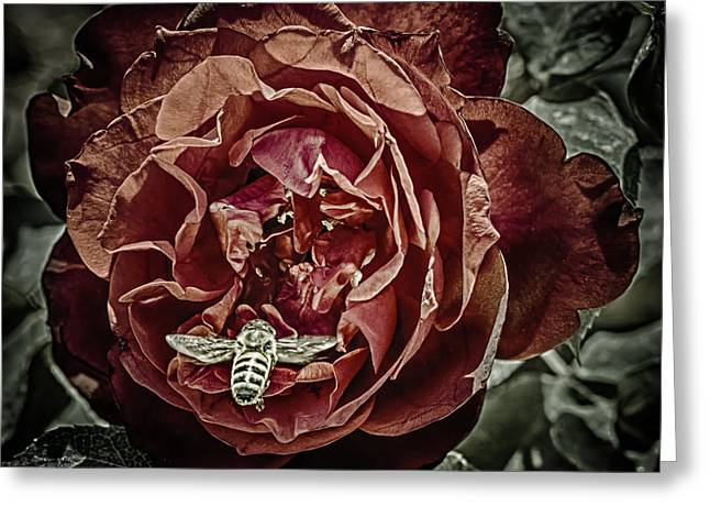 Rose Petals Greeting Cards - Buzzed Greeting Card by Scott  Wyatt