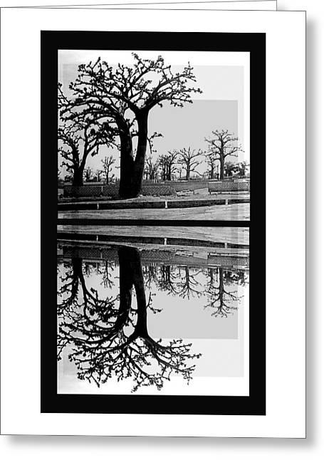 Baobab Greeting Cards - Bw Baobab Reflections Greeting Card by Caroline Czelatko