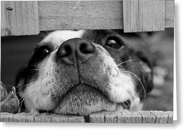 Love Between Dogs Greeting Cards - By a Nose Greeting Card by Pixabay