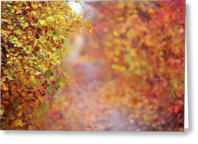 By Autumn Path Greeting Card by Jenny Rainbow