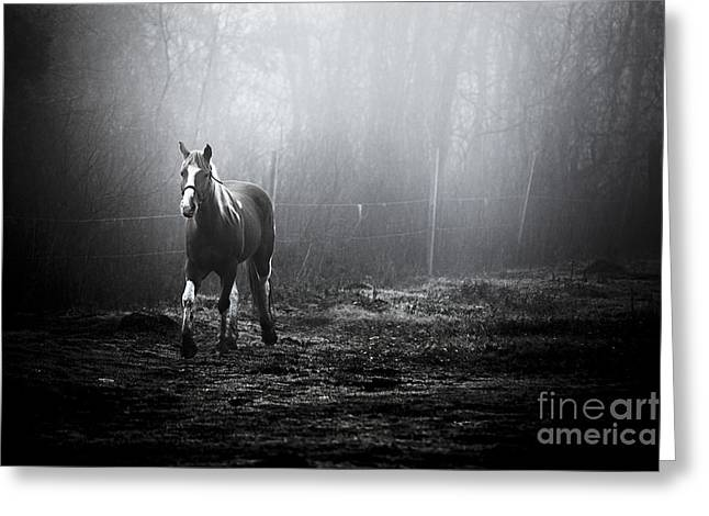 Horse Images Greeting Cards - By Dawns Early Light Greeting Card by Katya Horner