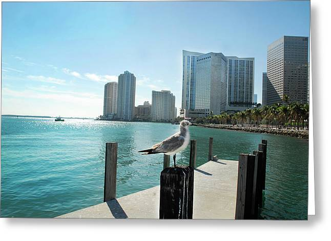 Brickell Greeting Cards - By the Bay Greeting Card by Mariatrina Andrade