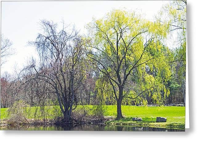 Willow Lake Greeting Cards - By Waters Edge Greeting Card by Douglas Miller