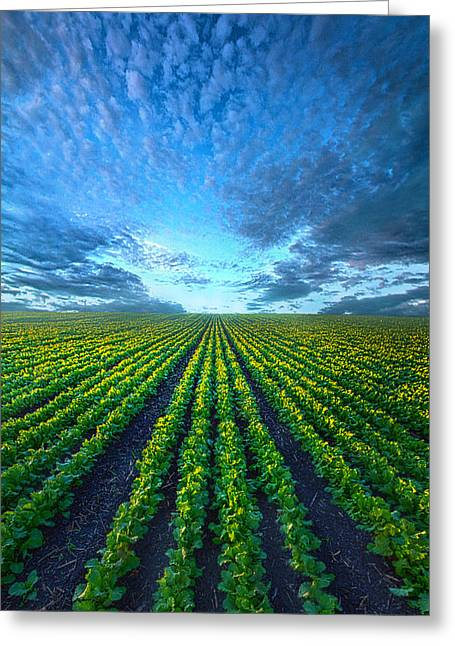 Greeting Cards - Cabbage Forever Greeting Card by Phil Koch