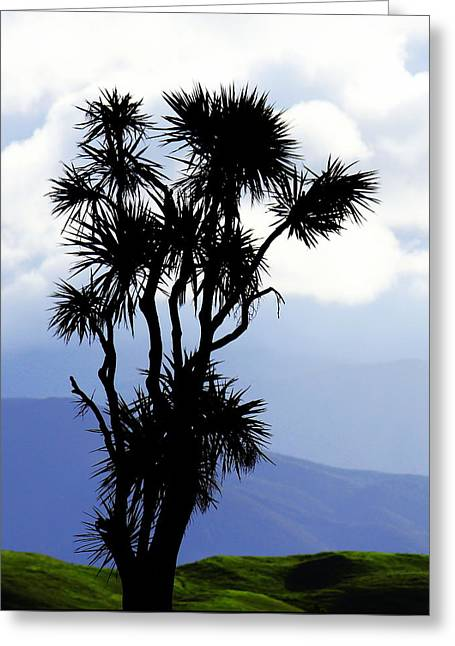 Cordylines Greeting Cards - Cabbage Tree Silhouette Greeting Card by Karen Wood
