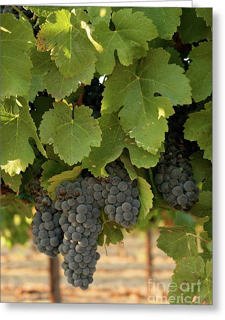Cabernet Grapes Greeting Card by Brooke Roby