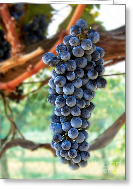 Purple Grapes Greeting Cards - Cabernet Sauvignon Greeting Card by Robert Bales