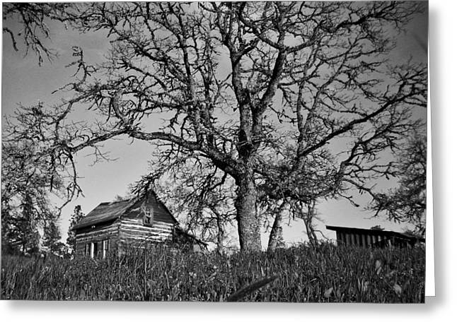 Shed Greeting Cards - Cabin Greeting Card by Sara Stevenson