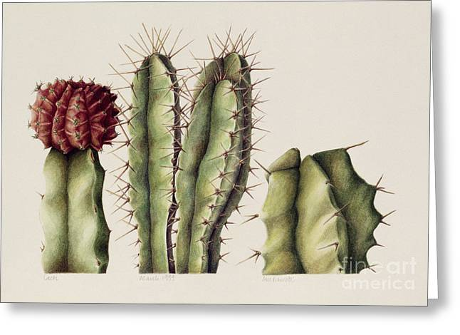 Desert Greeting Cards - Cacti Greeting Card by Annabel Barrett
