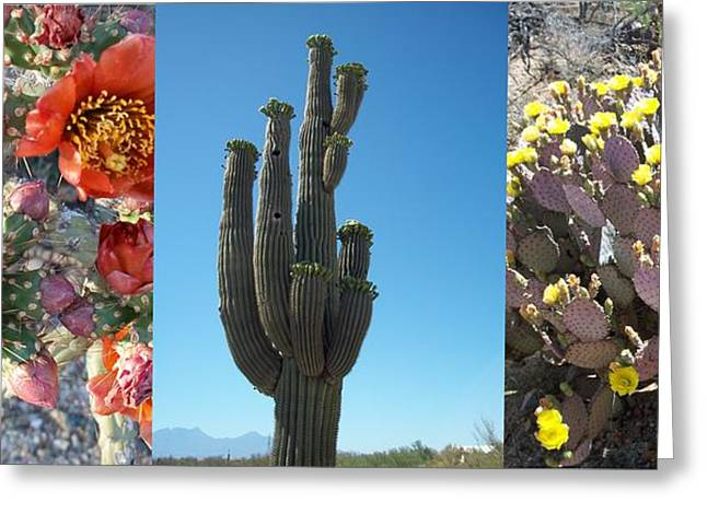 Lisa Bentley Greeting Cards - Cacti Blooming Collage Greeting Card by Lisa Bentley