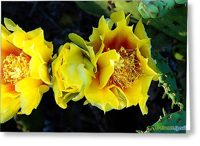 African-americans Greeting Cards - Cactus Bloom 2 Greeting Card by Everett Spruill