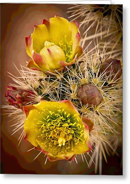 Desert Pyrography Greeting Cards - Cactus Blooms Greeting Card by Rick Strobaugh