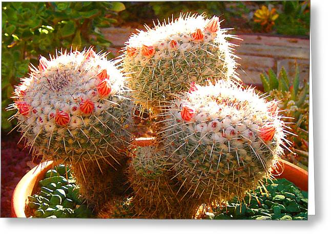 Cactus Buds Greeting Card by Amy Vangsgard